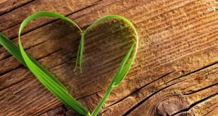 Une saint valentin éthique et responsbale