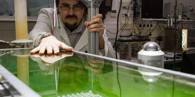 Bio-bitume à base d'algues microscopiques