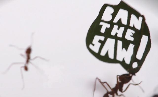 ant-rally-ban