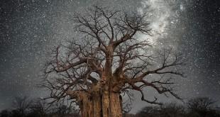 Beth Moon Arbres sous les étoiles