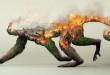 Détruire la nature c'est détruire la vie, 3 images poignantes pour sauver la planète