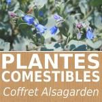 Coffret 8 plantes comestibles Alsagarden