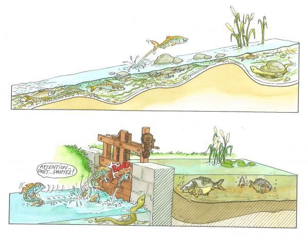 continuite-ecologique-riviere