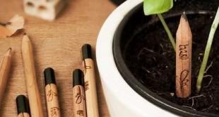 Le crayon Sprout