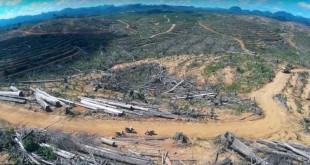 deforestation-indonesie