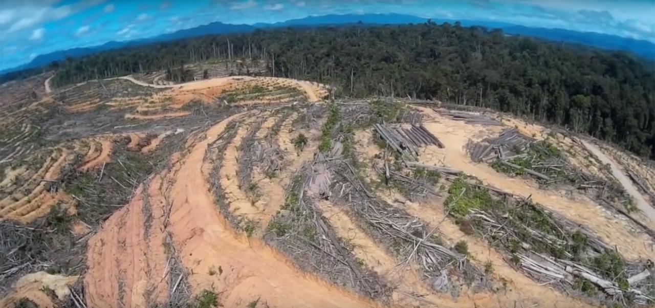 deforestation-palmier-huile
