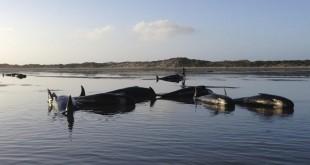 echouage-baleine-farewell