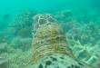 Découvrez la grande barrière de corail à travers les yeux d'une tortue