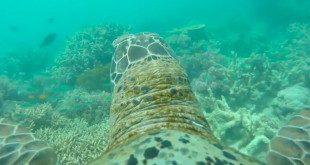 Grand ebarriere de corail vu par une tortue