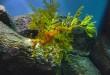 5 photos d'hippocampes complétement incroyables