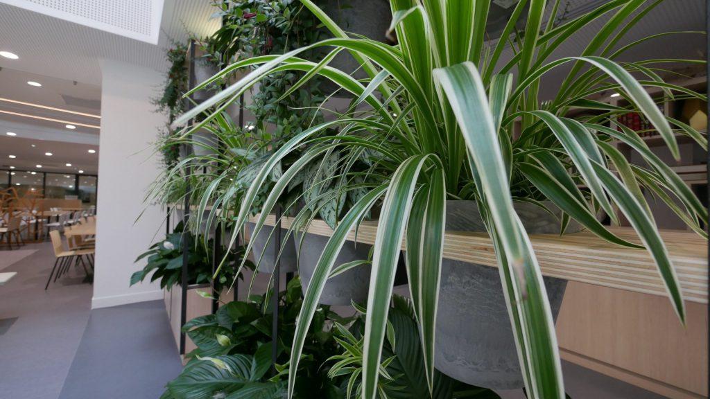 location-plante-paris-entreprise