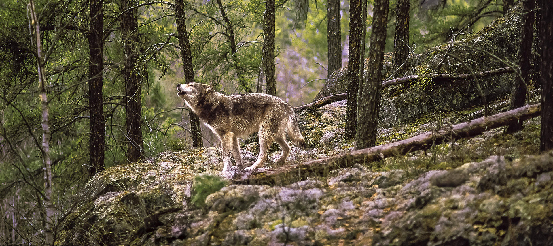 Nature 365 : Quelques minutes de nature en vidéo à ...