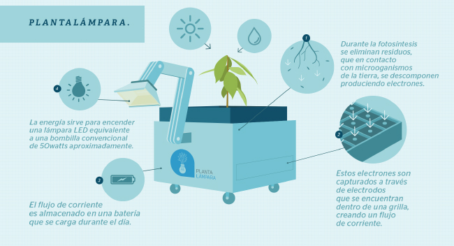 plantalampara-explication-infographie_