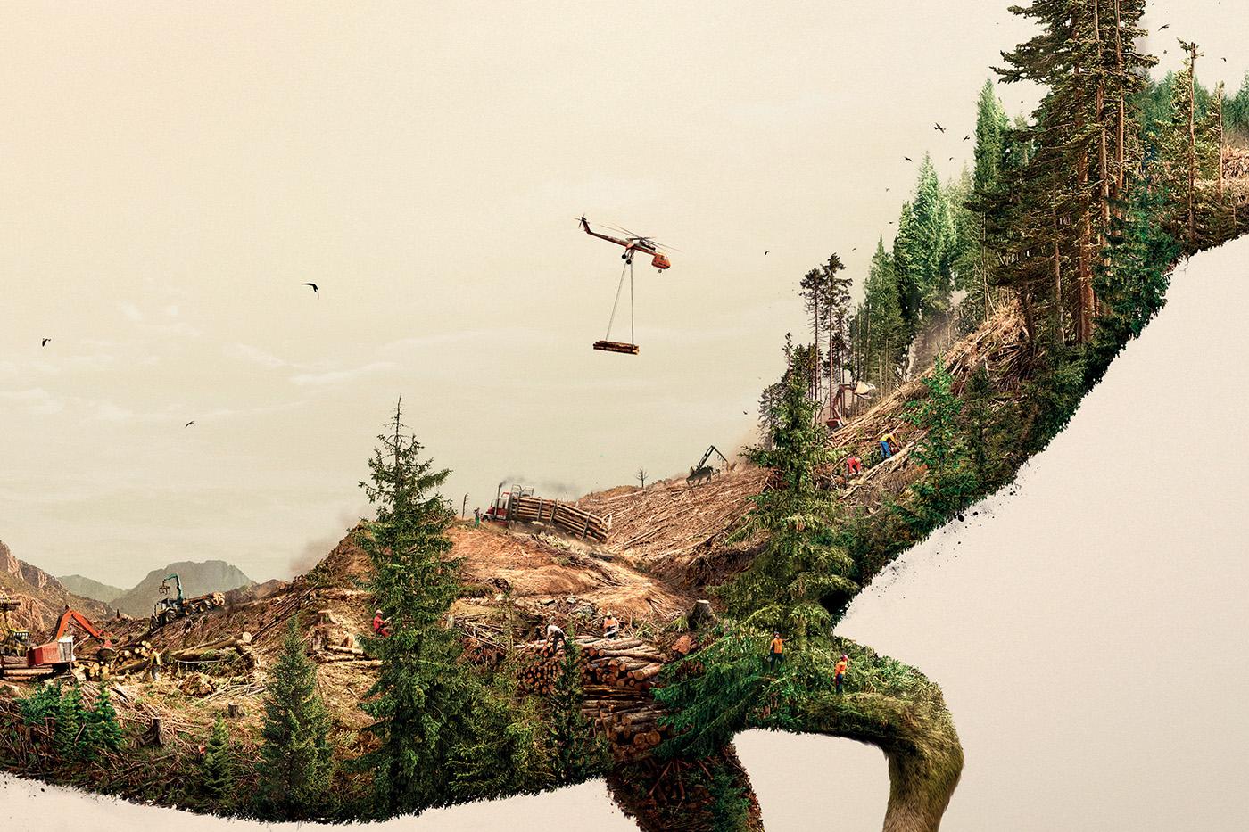 stop-deforestation-robin-wood-details