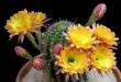 timelapse-echinopsis-cactus-krehel