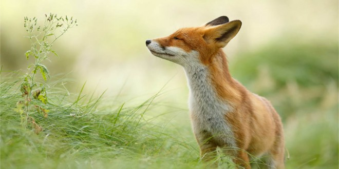 Photos tirée de Zen foxes